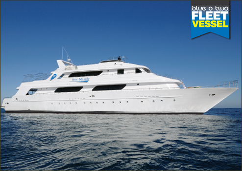 The Blue Melody Liveaboard